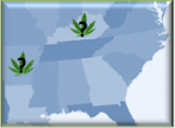 Image for medical marijuana in Arkansas and Kentucky