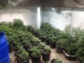 , 3 Simple Tricks for Winterizing an Indoor Marijuana Cultivation Facility