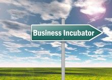 cannabis business incubator