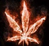 marijuana wildfires