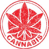60315838 - cannabis or marijuana red leaf grunge design  inscribed in a circle, template for vector rubber stamp.