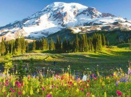 , Washington state rule change expands business options for marijuana cultivators