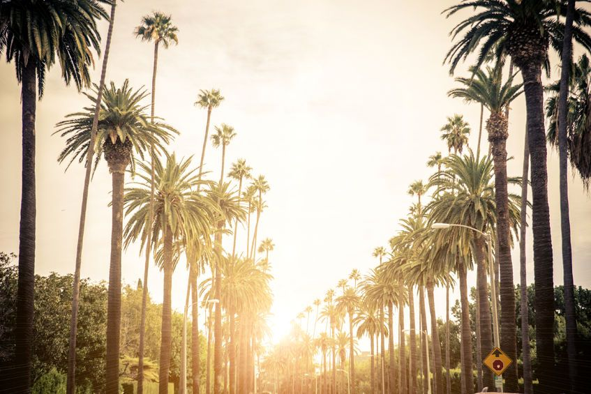 , It's not easy, but nonresident cannabis entrepreneurs can set up shop in California