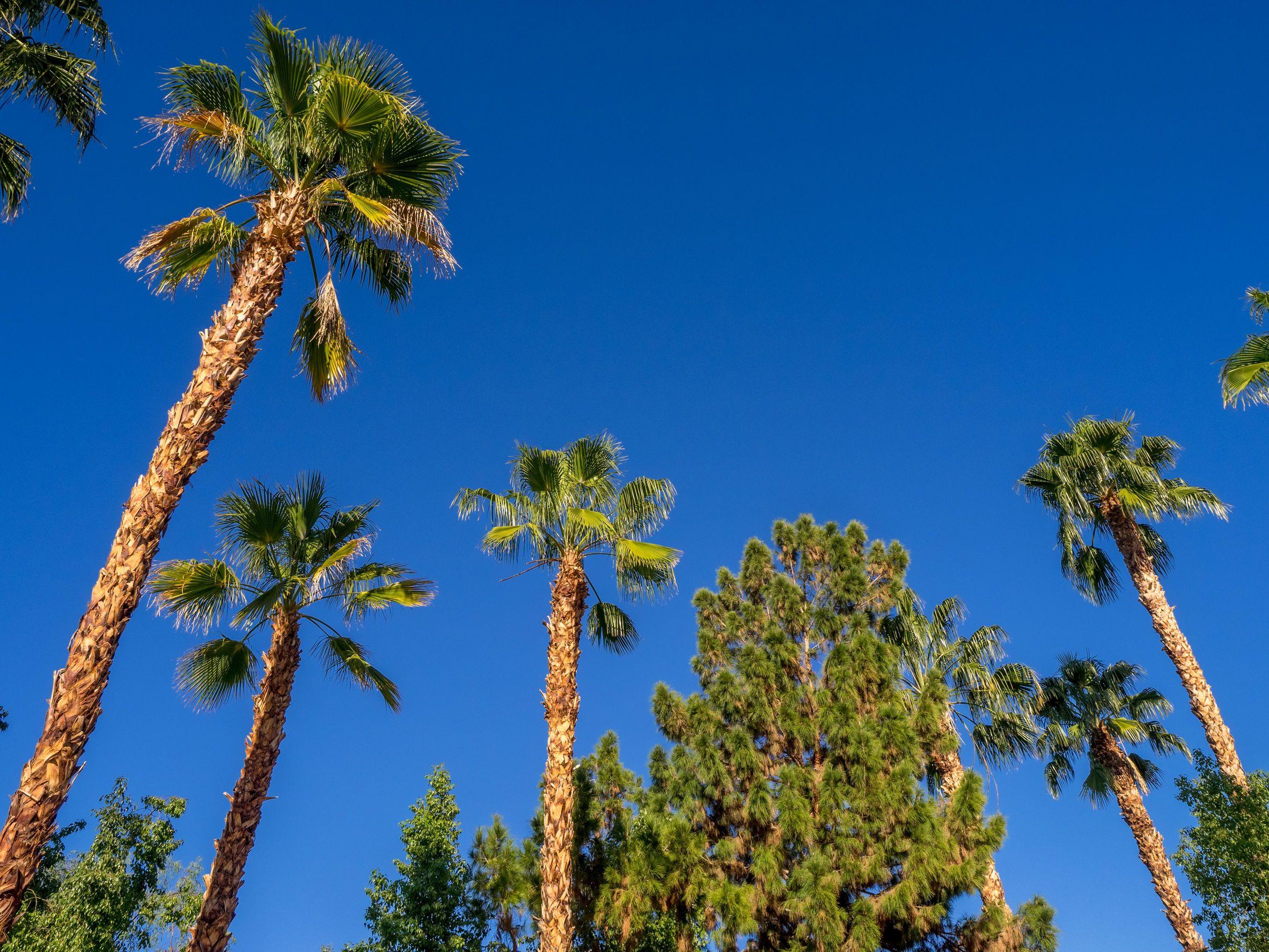 California marijuana regulators, California begins enforcement against unlicensed marijuana businesses