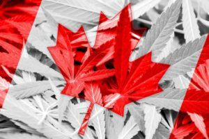 , Marijuana heavyweights unite to form industry group in Canada