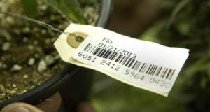 , Delay in Washington state's marijuana seed-to-sale system causes diversion concerns