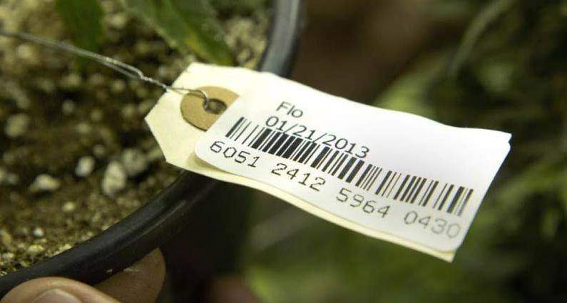 Maine marijuana regulators try to end seed-to-sale tracking confusion