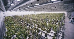 Canada cannabis inspections, 92% of licensed marijuana producers pass sales inspection as Health Canada boosts capacity