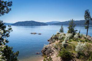 Idaho lumber business sues Massachusetts marijuana firm over logo similarity