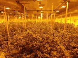 , Reporter's California Notebook: Recreational marijuana companies overwhelmed during new market launch