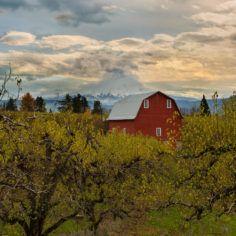 Image of an Oregon farm