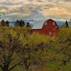 Oregon Cannabis Business, CBD & Medical Marijuana Legal News