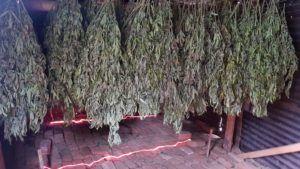 , Latin America Update: Marijuana business developments in Colombia
