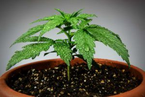 4Front Holdings public, Cannabis firm 4Front to go public after closing $13.4 million raise