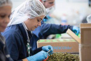 Election 2018 coverage - Marijuana Business Daily