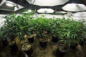 Cannabis sativa L, What is 'marijuana'? Name game limits cannabis entrepreneurs