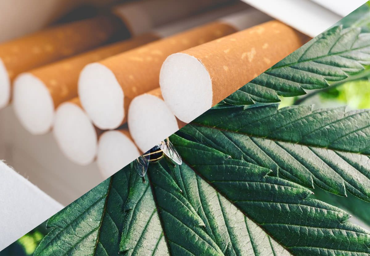 Marlboro maker buys 45% stake in cannabis firm Cronos for CA