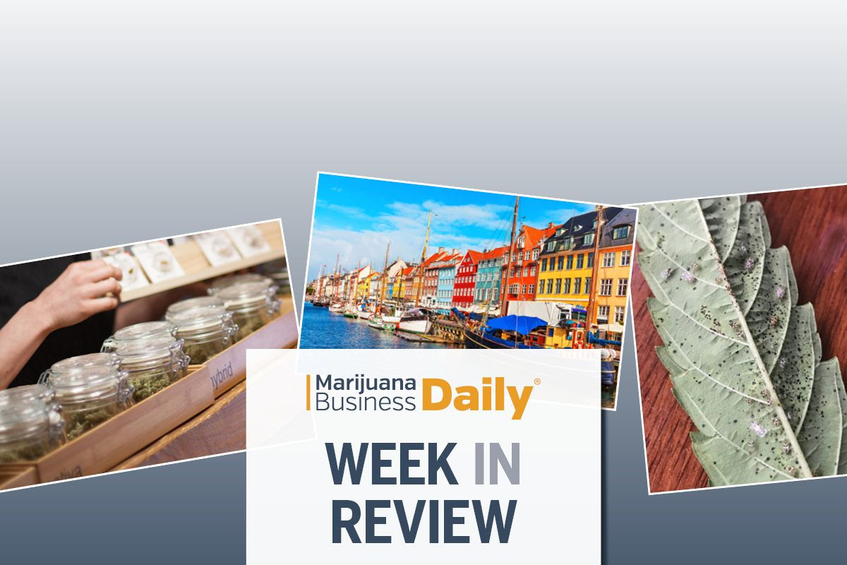Unlicensed California collectives/co-ops illegal in California, Denmark medical cannabis exports, Oregon cannabis harvest, Cannabis business takeaways for week ending Jan. 11 (SLIDESHOW)