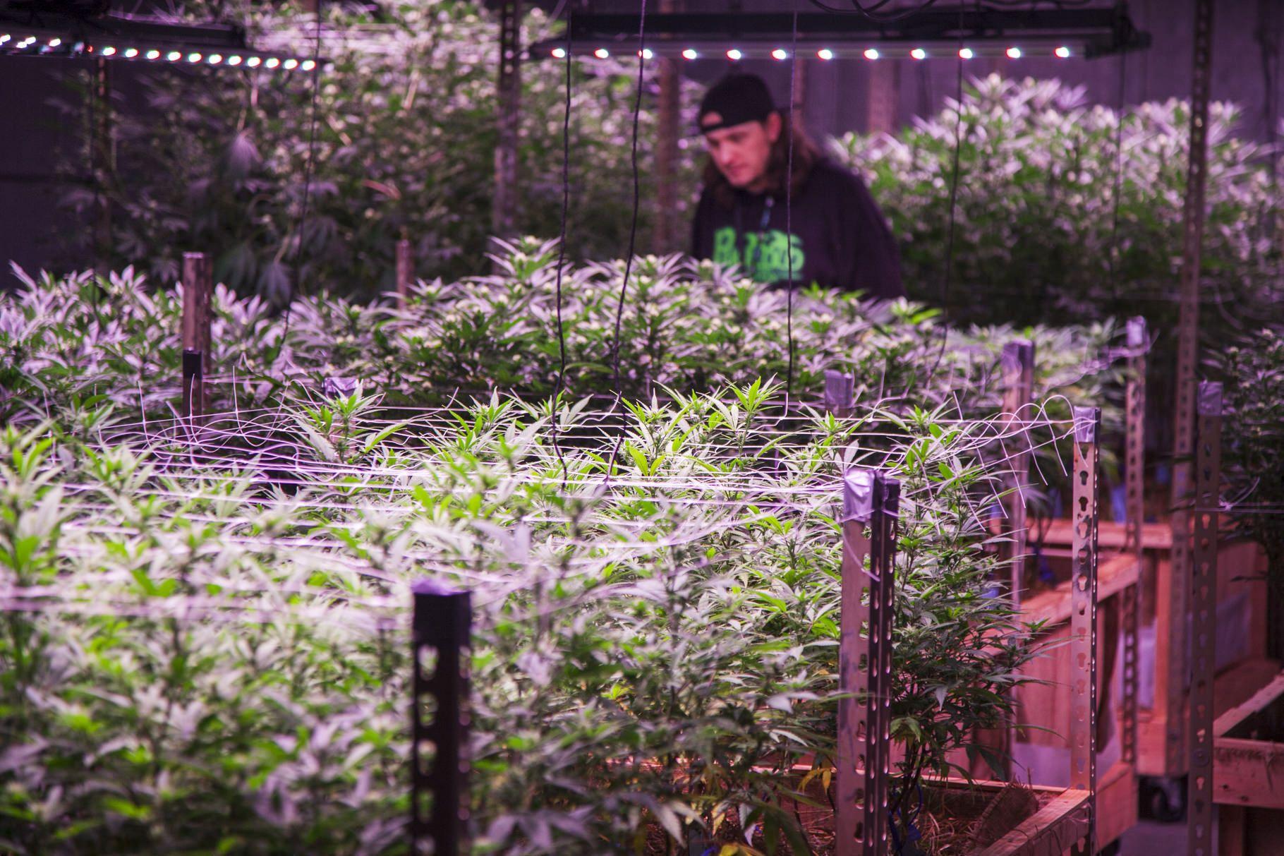 photos marijuana business magazine, Behind the Cover: Photos from Marijuana Business Magazine's January Issue