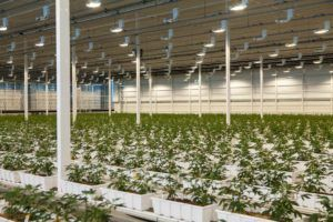 Aurora Sky production, Aurora's CA$150 million cannabis greenhouse fully licensed for cultivation, sales