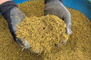 Marijuana waste disposal - Cannabis waste disposal is big