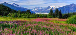 Alaska marijuana businesses, Alaska lawmakers reject cannabis critic's appointment to state's Marijuana Control Board