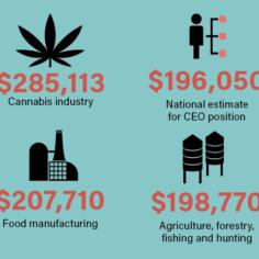 Cannabis Jobs Salary Report | Marijuana Industry Salary