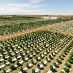 Image of Los Suenos Farms fields