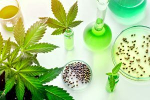 cannabis genetics, How cannabis companies can protect intellectual property in the wake of Phylos Bioscience uproar
