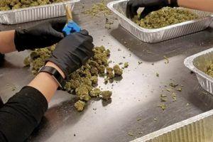 employing temporary marijuana workers, Cannabis companies seeking short-term help have plenty of options