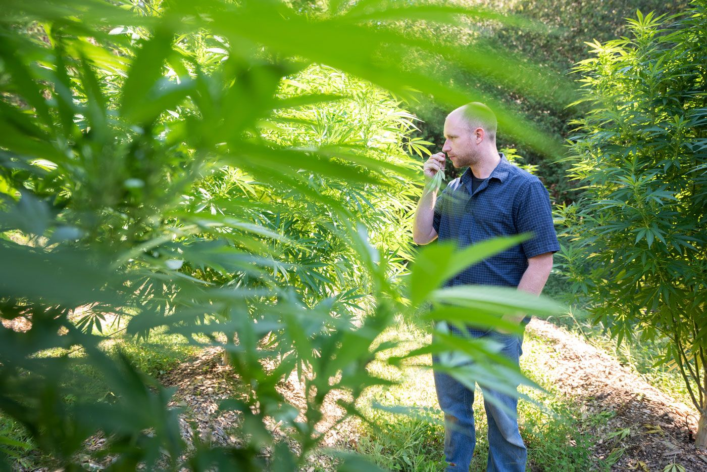 , A new way to commercialize cannabis in Canada: Q&A with Mark Spear of Wildfire Collective