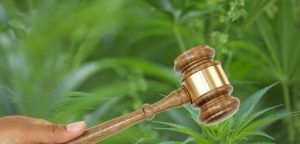 cannabis payment company, Cannabis payment provider allegedly owes millions to MJ retailers