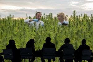 massachusetts marijuana companies, New Massachusetts training program helps cannabis companies avoid hefty noncompliance fines