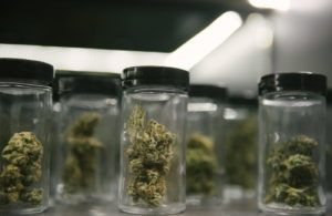 coronavirus; marijuana, Medical cannabis businesses increasingly deemed 'essential' during coronavirus pandemic