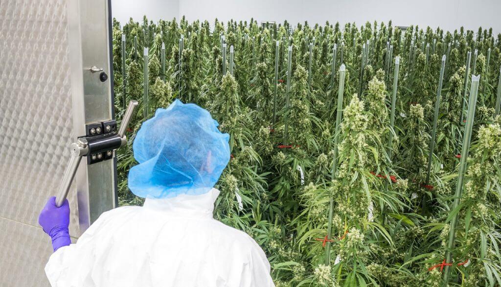 covid-19 freezes European-GMP cannabis inspections, COVID-19 crisis effectively freezes European GMP cannabis inspections in Canada, elsewhere