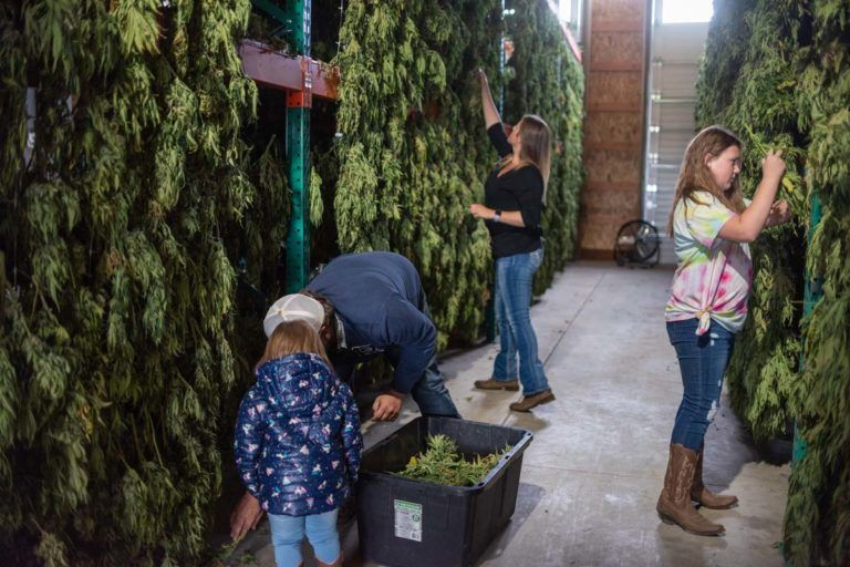 Take Our Daughters And Sons To Work Day, Cannabis executives participate in Take Our Daughters and Sons to Work Day