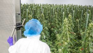 COVID-19 crisis effectively freezes European GMP cannabis inspections in Canada, elsewhere