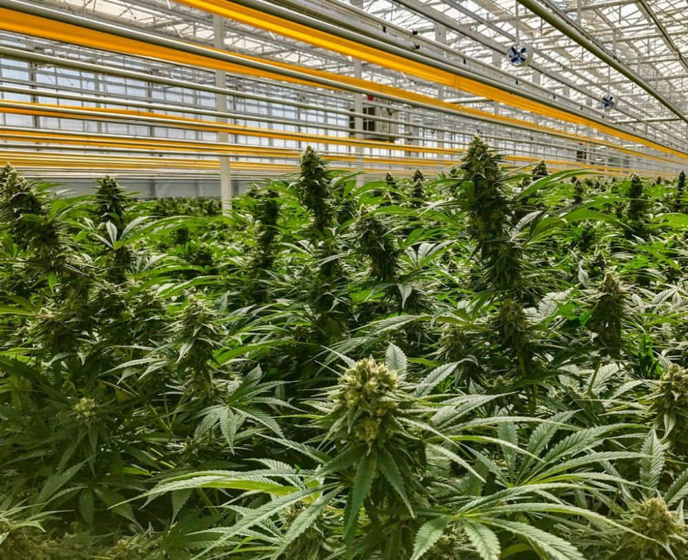 Aphria, Tilray to host April shareholder meetings about planned merger