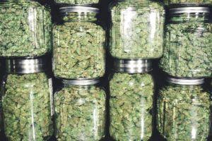 wholesale cannabis prices, New report analyzes US wholesale cannabis prices across the nation