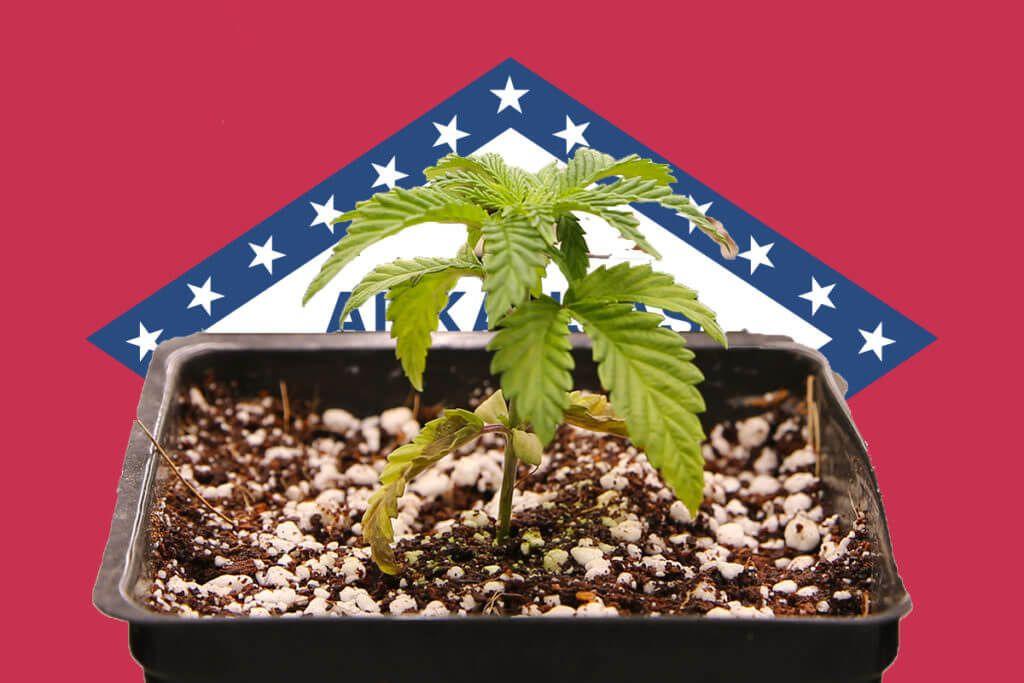 Arkansas reaches $187 million in medical cannabis sales