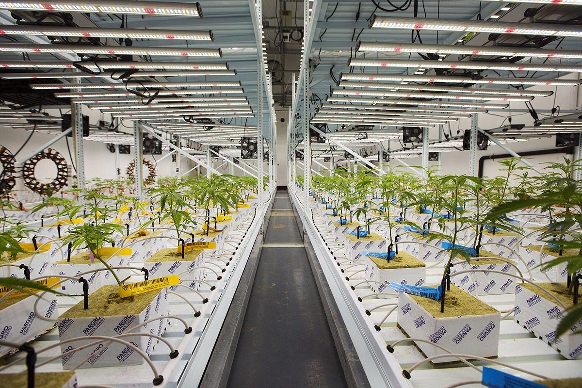California marijuana lighting, Proposed LED mandate could cost California's indoor marijuana growers millions