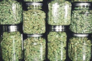 photo of Shelf-life stability: Here's what cannabis-infused product makers need to know image