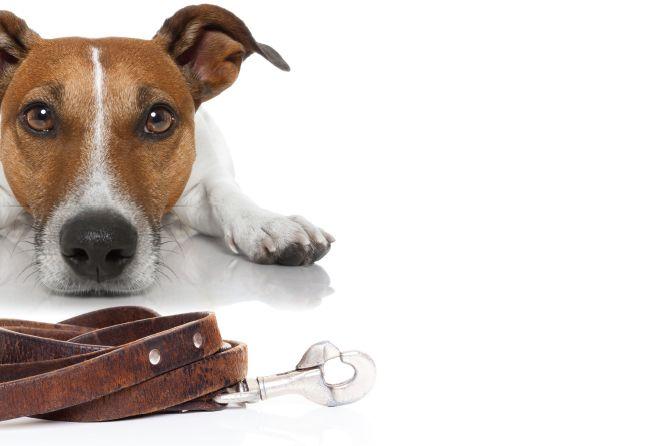 , Unleashing the Pet CBD Market