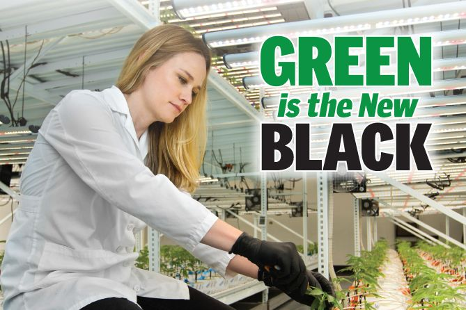 , Green is the New Black