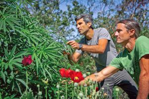 , Craft Cannabis: Small-Batch Business