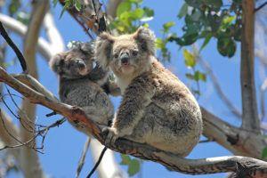 , Growing Momentum: Australia