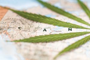 Global cannabis sales, Mistakes by Canada's largest cannabis companies offer insight into global expansion