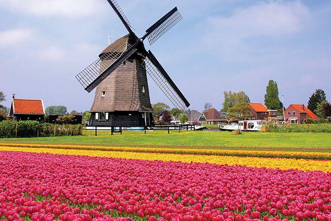 , Growing Momentum: The Netherlands