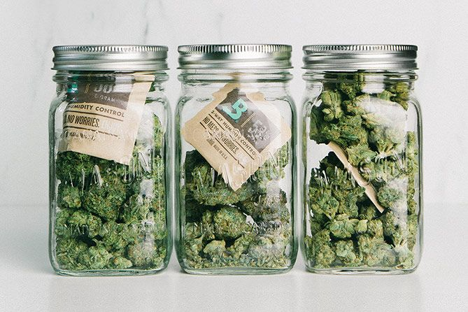 , Cannabis Aficionado