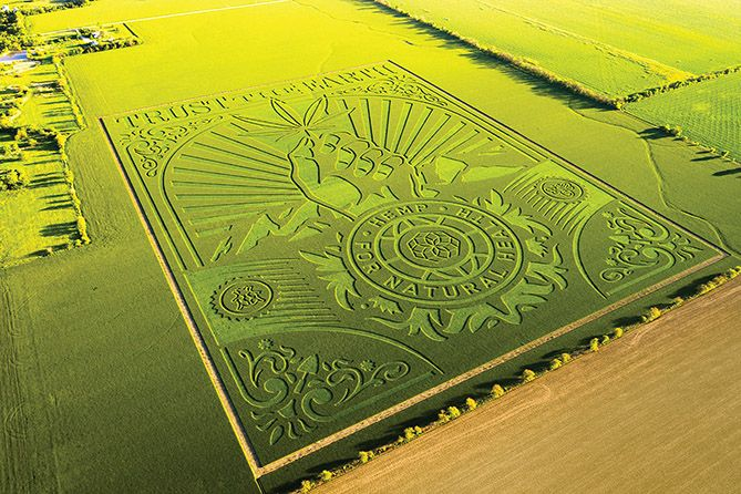 , CBD Firm Unveils Farm Art